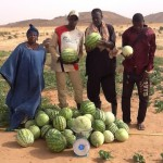 Water melons In Neem Orchard