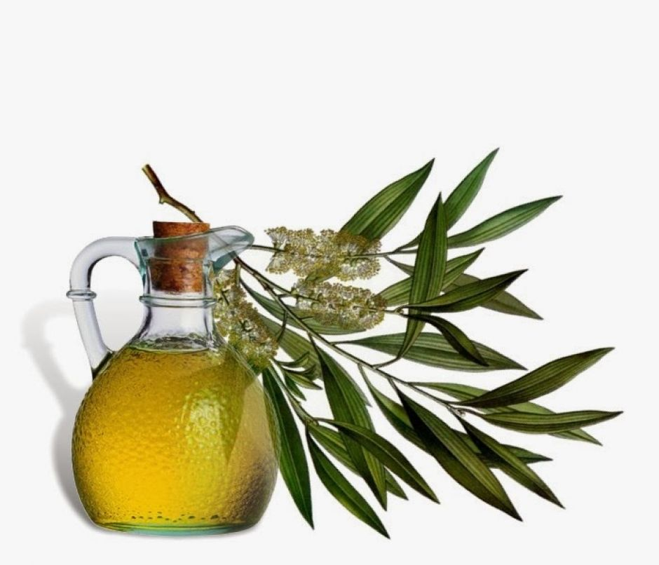 Tea Tree Oil – Benefits for Healthy Skin